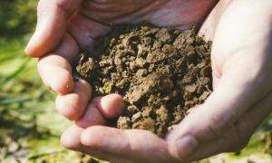 家族から応援される母や妻になるための土壌づくり