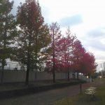 紅葉の運動公園で30分ジョグ【トレ-ニング日記】