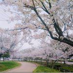 ビルドアップ走のつもりがただのお花見ジョギング【トレーニング日記】