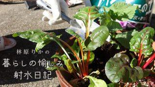 【更新情報】「メディア掲載・出演実績」に「林原りかの 暮らしの愉しみ 射水日記」「10 射水市産の培養土で、野菜と花の寄植えに挑戦!」(射水ケーブルネットワーク)を追加