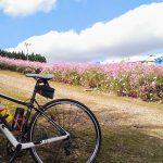 100万本のコスモスが揺れる「となみ夢の平コスモスウォッチング」に自転車でGO!【トレ-ニング日記】