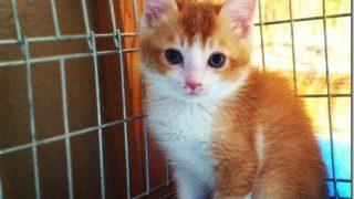 飼い猫が病気で通院スタート。看病も通院も費用も大変です!